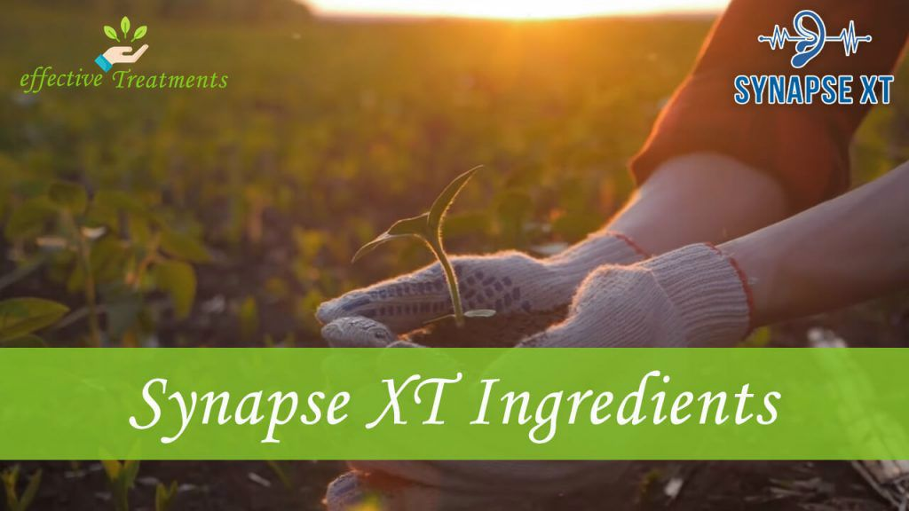 synapse xt supplement
